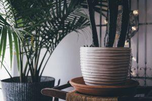 Hoe houdt je een kamerplant in leven