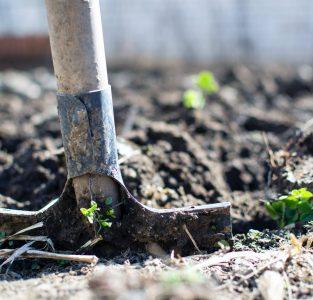 De beuk erin – of een andere boom: werk aan de winkel die jouw tuin heet