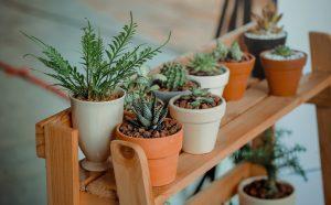 Hoe zorg je goed voor planten?